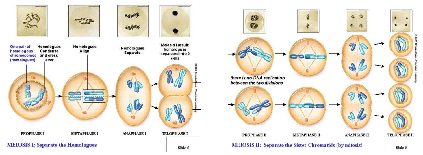 Cell and molecular biology 3